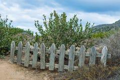 Ξεπερασμένος ξύλινος φράκτης στύλων στην αγριότητα Στοκ Εικόνες