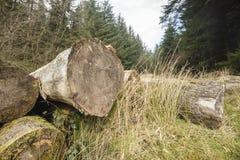 Ξεπερασμένος συνδέεται το δάσος στοκ εικόνες