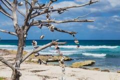 Ξεπερασμένο δέντρο με τα θαλασσινά κοχύλια στην παραλία της Isla Mujeres, Μεξικό Στοκ φωτογραφία με δικαίωμα ελεύθερης χρήσης