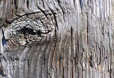 ξεπερασμένο θέση δάσος κ&alph στοκ φωτογραφίες
