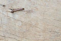 Ξεπερασμένο ξεπερασμένο ραγισμένο άσπρο χρωματισμένο ξύλινο υπόβαθρο Στοκ φωτογραφία με δικαίωμα ελεύθερης χρήσης