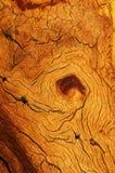 Ξεπερασμένο ξύλινο σιτάρι στοκ φωτογραφία με δικαίωμα ελεύθερης χρήσης