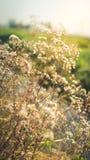 Ξεράνετε λίγα το λουλούδι Στοκ φωτογραφία με δικαίωμα ελεύθερης χρήσης