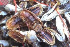 Ξεράνετε τα παστά ψάρια, ταϊλανδικά τρόφιμα Στοκ Φωτογραφία