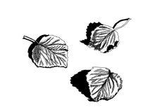 Ξεράνετε τα πεσμένα φύλλα της σημύδας Στοκ Εικόνες