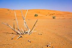 Ξεράνετε τα ραβδιά στην κόκκινη έρημο Hatta κοντά στο Ντουμπάι Στοκ εικόνες με δικαίωμα ελεύθερης χρήσης