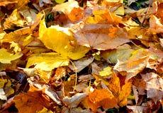 Ξεράνετε τα φύλλα δύο Στοκ φωτογραφία με δικαίωμα ελεύθερης χρήσης