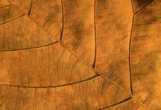 ξεράνετε τα φύλλα κατασκευασμένα Στοκ εικόνα με δικαίωμα ελεύθερης χρήσης