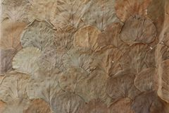 Ξεράνετε τα φύλλα με το ισχυρό φύλλο nervs που κολλιέται στον τοίχο Στοκ φωτογραφία με δικαίωμα ελεύθερης χρήσης
