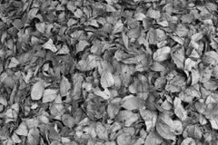 Ξεράνετε τα φύλλα σε γραπτά 2 στοκ φωτογραφία με δικαίωμα ελεύθερης χρήσης
