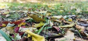 Ξεράνετε τα φύλλα στη χλόη Στοκ φωτογραφία με δικαίωμα ελεύθερης χρήσης