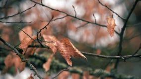 Ξεράνετε τα φύλλα στους κλάδους το χειμώνα απόθεμα βίντεο