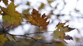 ξεράνετε τα φύλλα στους κλάδους φιλμ μικρού μήκους