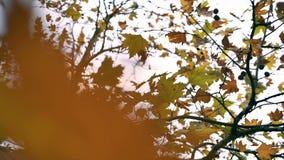 ξεράνετε τα φύλλα στους κλάδους απόθεμα βίντεο