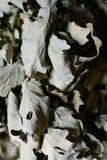 ξεράνετε τα φύλλα στους κλάδους Στοκ Εικόνα