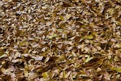 Ξεράνετε τα φύλλα στο έδαφος. Στοκ φωτογραφίες με δικαίωμα ελεύθερης χρήσης