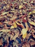 Ξεράνετε τα φύλλα στο πεζοδρόμιο στοκ εικόνες με δικαίωμα ελεύθερης χρήσης