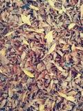 Ξεράνετε τα φύλλα στο πεζοδρόμιο στοκ φωτογραφία