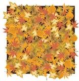 ξεράνετε τα φύλλα Στοκ εικόνες με δικαίωμα ελεύθερης χρήσης