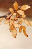 ξεράνετε τα φύλλα Στοκ Εικόνα