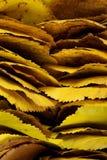 ξεράνετε τα φύλλα Στοκ Εικόνες