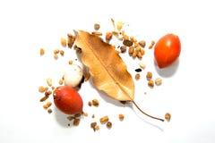 Ξεράνετε τα φύλλα και τα καφετιά φύλλα Στοκ εικόνες με δικαίωμα ελεύθερης χρήσης