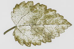 ξεράνετε τα φύλλα που απομονώνονται Στοκ Φωτογραφία