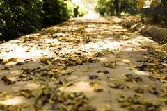 Ξεράνετε τα φύλλα σε ένα πάρκο το ινδικό καλοκαίρι Στοκ Εικόνα