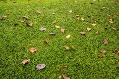 Ξεράνετε τα φύλλα στη χλόη Στοκ Φωτογραφίες