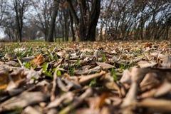 Ξεράνετε τα φύλλα στον τομέα Στοκ Εικόνα