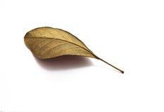 Ξεράνετε τα φύλλα στο άσπρο υπόβαθρο Στοκ εικόνες με δικαίωμα ελεύθερης χρήσης