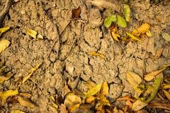 Ξεράνετε τα φύλλα στο έδαφος που ραγίζεται Στοκ Εικόνες