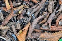 Ξεράνετε τα φύλλα στο πραγματικό χρώμα Στοκ Εικόνα