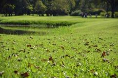 Ξεράνετε τα φύλλα στο φρέσκο κήπο Στοκ φωτογραφία με δικαίωμα ελεύθερης χρήσης