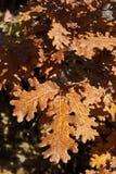 Ξεράνετε τα φύλλα Στοκ Φωτογραφία