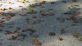 Ξεράνετε τα φύλλα απόθεμα βίντεο