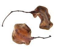 Ξεράνετε τα φύλλα Στοκ φωτογραφία με δικαίωμα ελεύθερης χρήσης