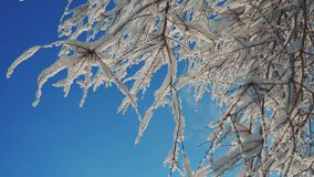 Ξεράνετε την παγωμένη λεύκα στο χιόνι χειμερινής ημέρας δέντρων κλάδων πάγου στο όμορφο τοπίο έντονου φωτός ήλιων φωτός του ήλιου απόθεμα βίντεο