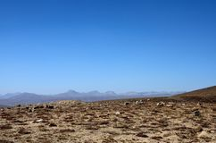 Ξεράνετε τη μμένους χλόη και τους θάμνους στο τοπίο Skardu Πακιστάν πεδιάδων Deosai στοκ εικόνες