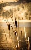 Χλόη νερού Στοκ εικόνες με δικαίωμα ελεύθερης χρήσης