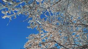 Ξεράνετε τον παγωμένο σφένδαμνο στο χιόνι χειμερινής ημέρας δέντρων κλάδων ελικοπτέρων πάγου στο όμορφο τοπίο έντονου φωτός ήλιων φιλμ μικρού μήκους