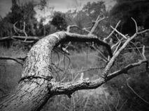 ξεράνετε το δάσος Στοκ φωτογραφία με δικαίωμα ελεύθερης χρήσης