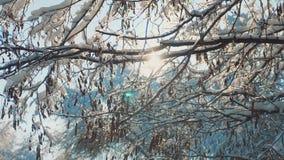 Ξεράνετε το παγωμένο τοπίο έντονου φωτός ήλιων φωτός του ήλιου χιονιού χειμερινής ημέρας δέντρων κλάδων όμορφο Ξηρός κλάδος δέντρ απόθεμα βίντεο