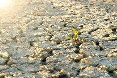 Ξεράνετε το ραγισμένο χώμα κατά τη διάρκεια του χρόνου ξηρασίας Στοκ Εικόνες