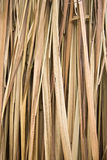 ξεράνετε το φοίνικα φύλλ&omega Στοκ Εικόνα