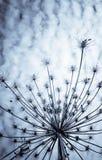 ξεράνετε το φυτό Στοκ Εικόνες
