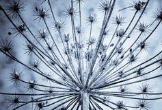ξεράνετε το φυτό Στοκ Εικόνα