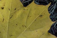 ξεράνετε το φύλλο πτώσης κίτρινο Στοκ φωτογραφία με δικαίωμα ελεύθερης χρήσης