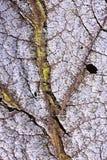 ξεράνετε το φύλλο πτώσης Στοκ φωτογραφία με δικαίωμα ελεύθερης χρήσης