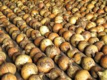 ξεραίνοντας κρεμμύδια Στοκ εικόνα με δικαίωμα ελεύθερης χρήσης